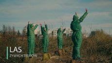 spot KOD-u o wycince drzew w Polsce