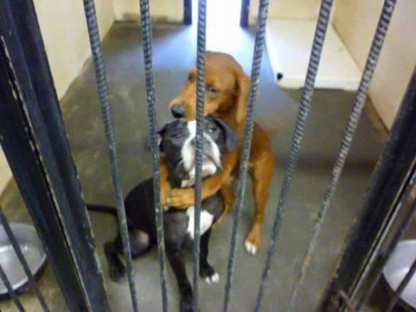 Jak zdjęcie uratowało dwa psy Kala i Keira