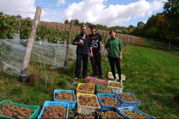 3 lata temu założyli w Polsce winnicę, dziś ich wino wygrywa międzynarodowe konkursy.